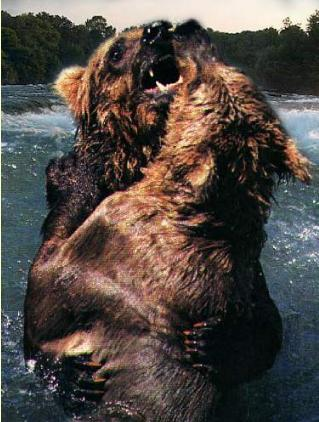 grizzlybearsfightinga
