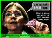 elizabeth-warren_brain_w438a