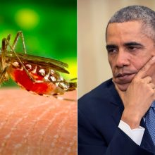 Zika: an obama train wreck in slow motion